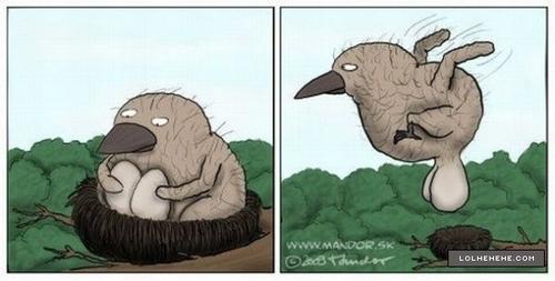 eggs-in-the-nest.jpg